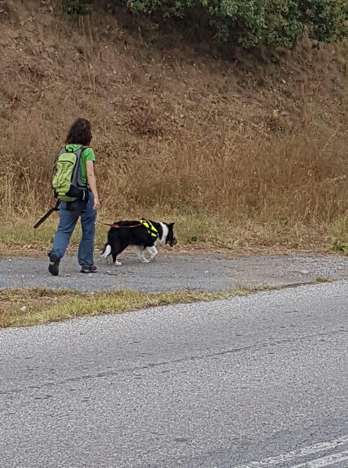 Φλώρινα: Μαζική δηλητηρίαση σκύλων από φόλες καταγγέλλει ο «Αρκτούρος»